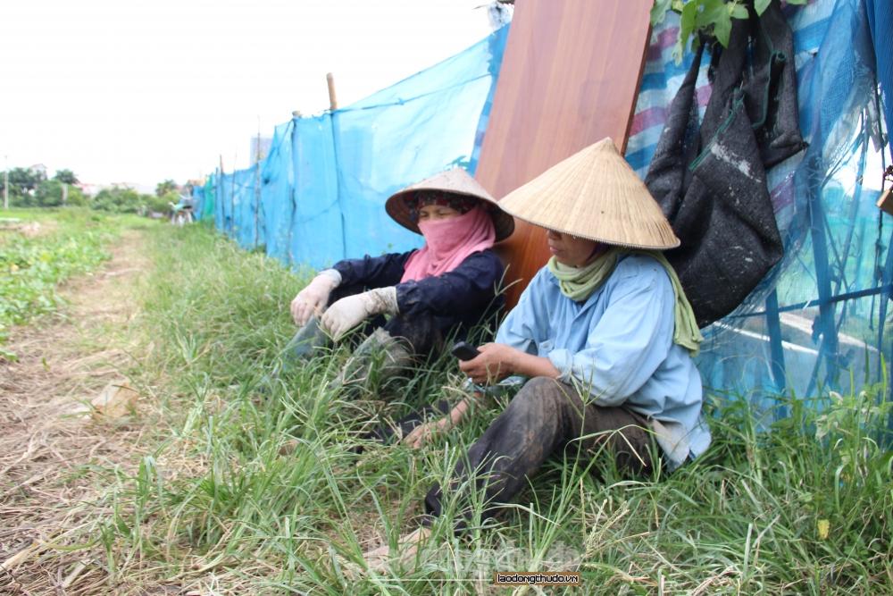 Thời tiết Hà Nội: Nắng nóng đến hết tuần