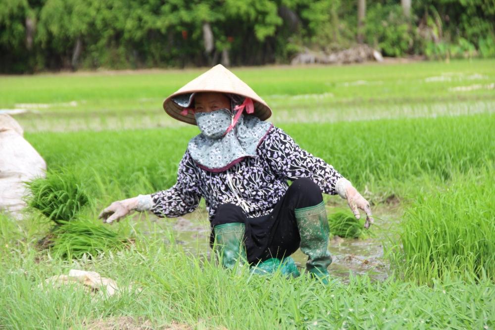 Nhiều điểm sáng trong phát triển ngành Nông nghiệp 6 tháng đầu năm