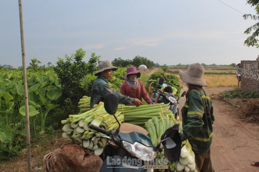 Huyện Mê Linh: Kinh tế tăng trưởng ổn định trong 6 tháng đầu năm