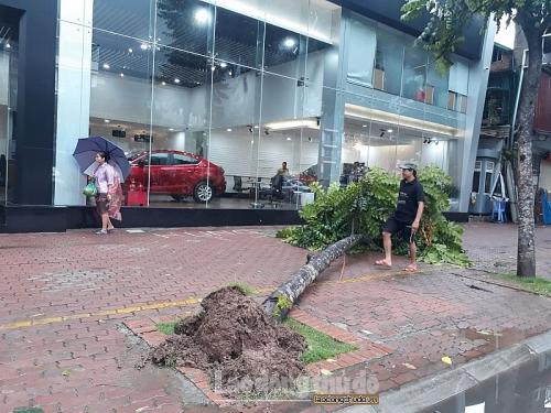 Bão số 3 đổ bộ: Nhiều cây xanh của Thủ đô bị quật đổ
