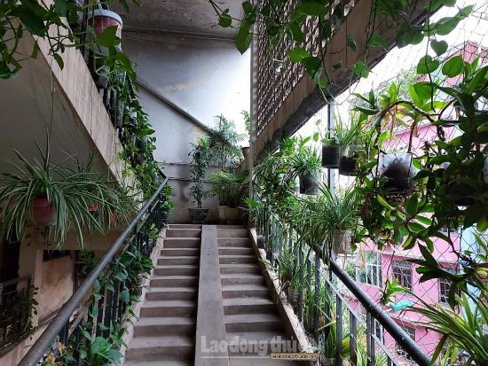Khu tập thể phường Phương Mai sáng hơn nhờ những dàn cây xanh