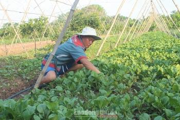 Người dân huyện Ứng Hòa ổn định cuộc sống nhờ chuyển đổi thành công cơ cấu cây trồng