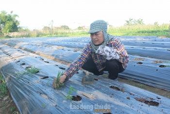 Chuyển đổi hiệu quả cơ cấu cây trồng nâng cao thu nhập cho người dân
