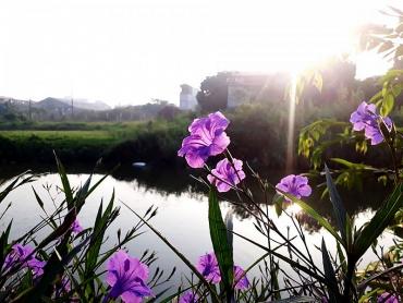 Con đường hoa thay đổi diện mạo thôn Quỳnh Đô