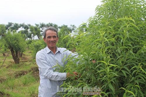 Nâng cao hiệu quả xây dựng nông thôn mới từ phát triển nông nghiệp