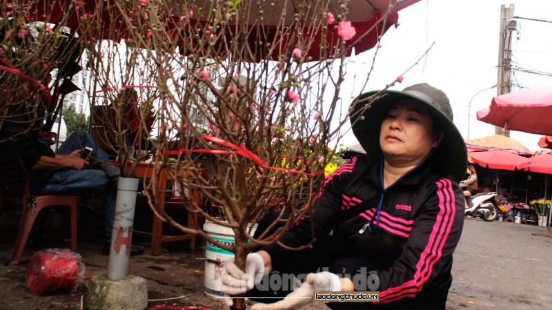 dao nhat tan bung no khoe sac tham tai cho hoa quang an