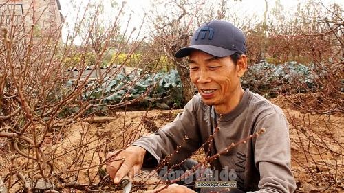 Làng nghề Nhật Tân tất bật chăm đào chờ Tết Canh Tý