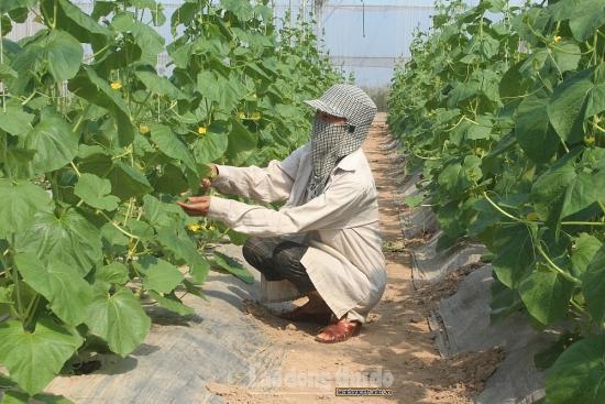 Nhiều thành tựu trong phát triển kinh tế huyện Ứng Hòa trong năm 2020