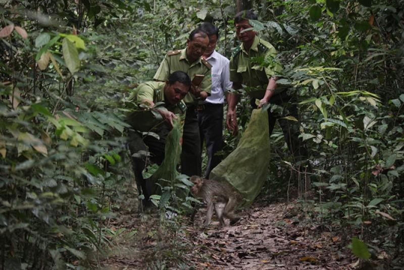 Chuyển giao, cứu hộ, bảo tồn nhiều động vật rừng quý hiếm