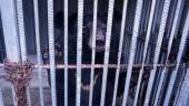 Cá thể gấu đầu tiên được tự nguyện chuyển giao trong năm 2018