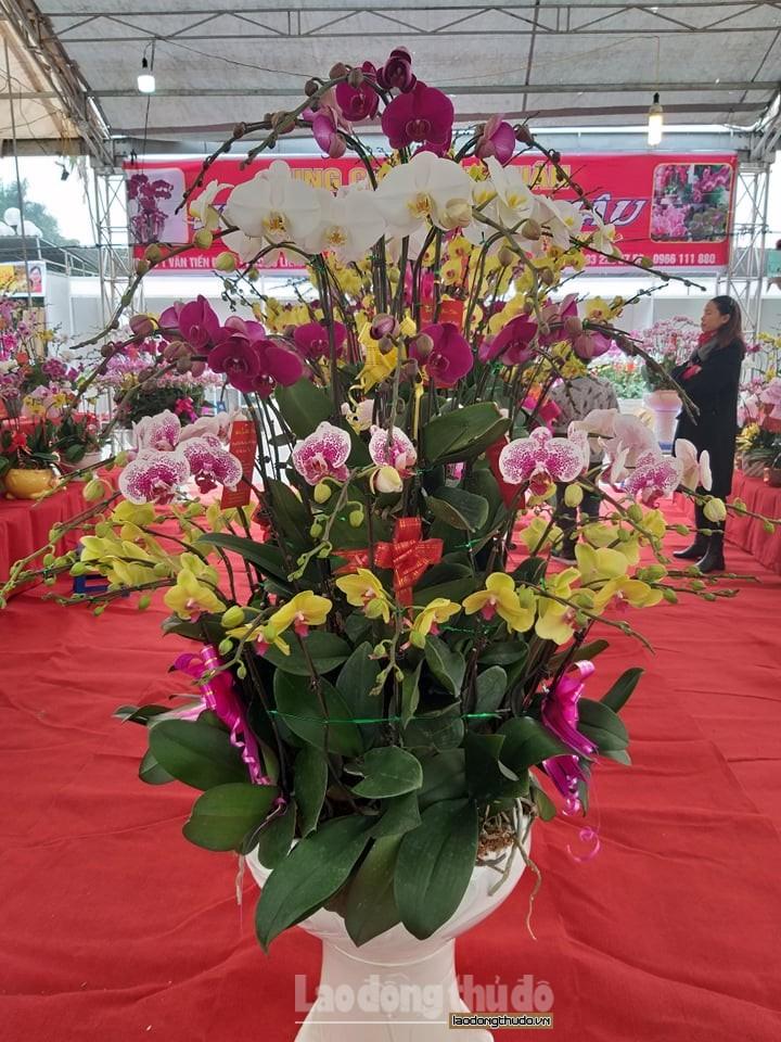 ha noi hoa lan ruc ro xuong pho don tet