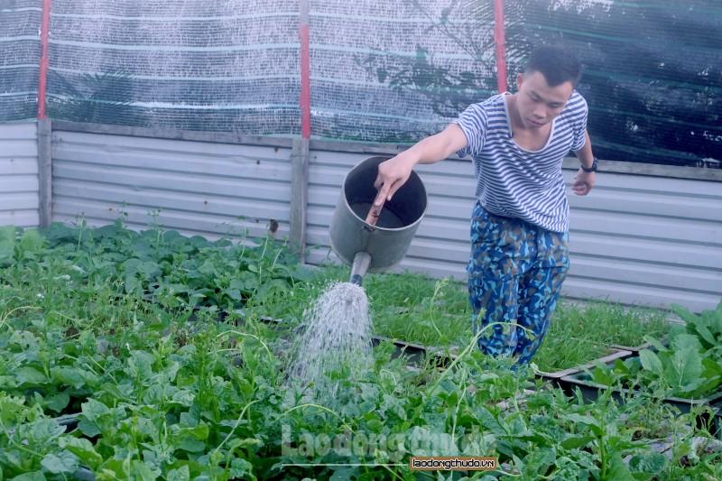 Mãn nhãn với vườn rau xanh trên đảo Trường Sa Đông