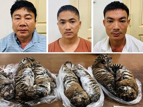 Trùm buôn bán hổ xuyên quốc gia lĩnh án 6 năm tù giam