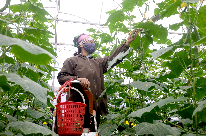 Chú trọng bảo đảm an toàn thực phẩm trong lĩnh vực nông nghiệp