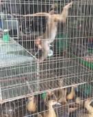 72 cá thể động vật hoang dã được giải cứu trong tháng 1/2018
