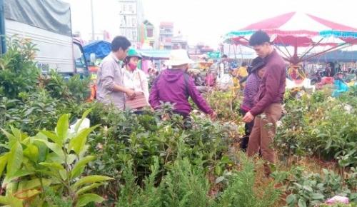 Hội chợ Xuân Liễu Đề - điểm đến của những người yêu thích sinh vật cảnh