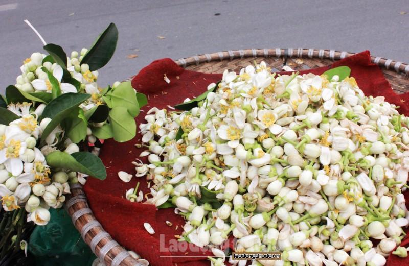 ha noi hoa buoi xuong pho gia 250000kg van hut khach