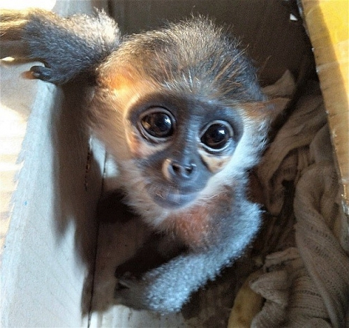 Tích cực giải cứu động vật hoang dã bị buôn bán, nuôi nhốt trái phép