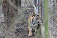 Quyết liệt đấu tranh với tội phạm về động vật hoang dã