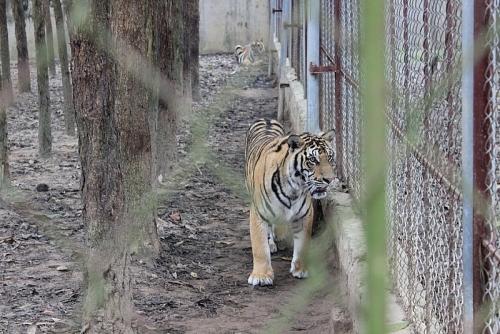 Hướng dẫn thực thi pháp luật về bảo vệ động vật hoang dã