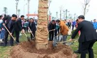 Đông Anh: Phấn đấu trồng mới 35.000 cây xanh theo tiêu chí cây đô thị