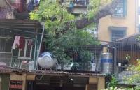 Những gia đình sống chung với... cây cổ thụ