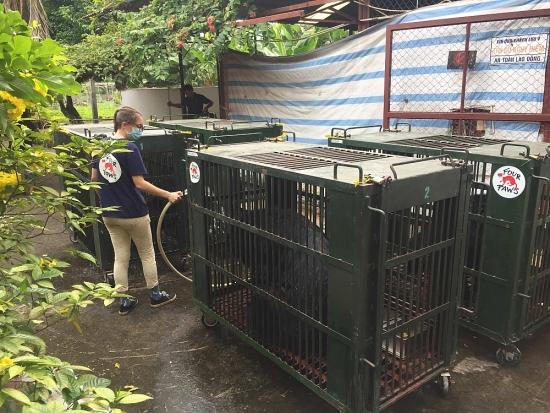 Giải cứu và tịch thu hơn 1.100 cá thể động vật hoang dã