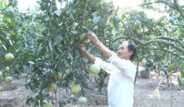 Huyện Phúc Thọ, phát huy hiệu quả các nguồn vốn vay