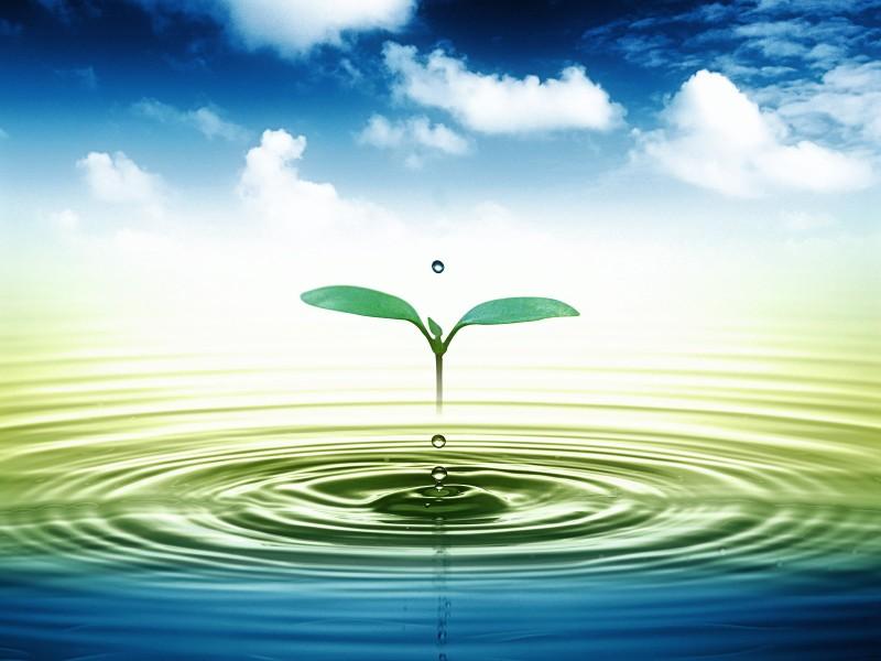 Tăng cường giải pháp tự nhiên để bảo vệ nguồn nước