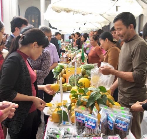 Tích cực hỗ trợ nông dân phát triển sản xuất, đẩy mạnh tiêu thụ nông sản