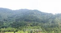 Hà Nội: Chú trọng đảm bảo an toàn phòng cháy, chữa cháy rừng