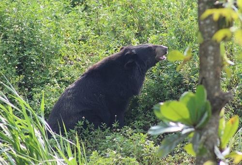 Hãy cho gấu cuộc sống tốt đẹp hơn