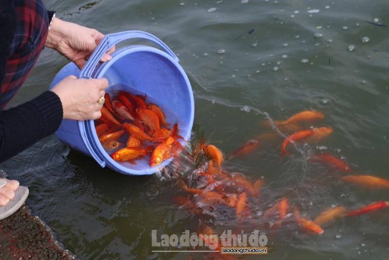 Thiết thực các hoạt động bảo vệ đa dạng sinh học trong lĩnh vực thủy sản