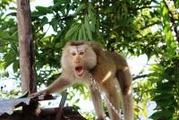 Cần quyết liệt trong công tác bảo vệ động vật hoang dã