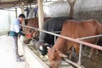 Tạo động lực xây dựng nông thôn mới