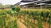 Nhân rộng diện tích trồng hoa, cây ăn quả cho hiệu quả kinh tế cao