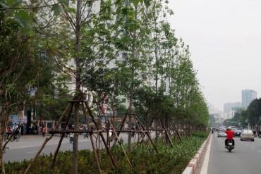 """Hà Nội: """"Xanh hóa"""" nhiều tuyến phố bằng cây phong lá đỏ"""