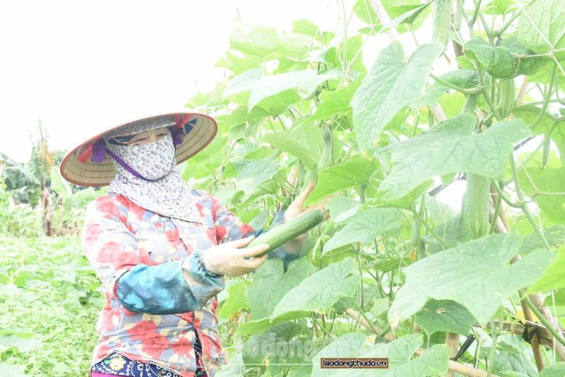 Quyết liệt triển khai các biện pháp thúc đẩy sản xuất nông nghiệp