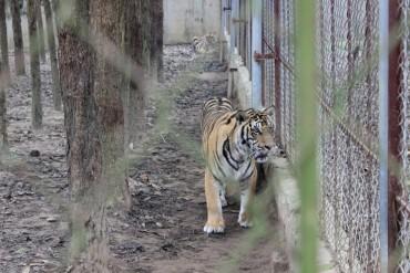 Tăng cường bảo vệ động vật hoang dã