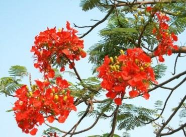 Rực rỡ mùa hoa tháng 5
