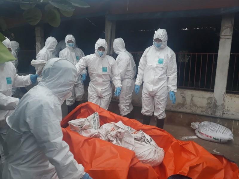 Cần quyết liệt hơn trong phòng, chống bệnh dịch tả lợn châu Phi
