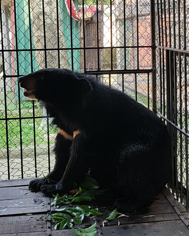 Thái Nguyên: Tịch thu và chuyển giao 2 cá thể gấu trái phép