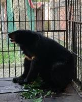 Triển khai hiệu quả công tác cứu hộ động vật hoang dã