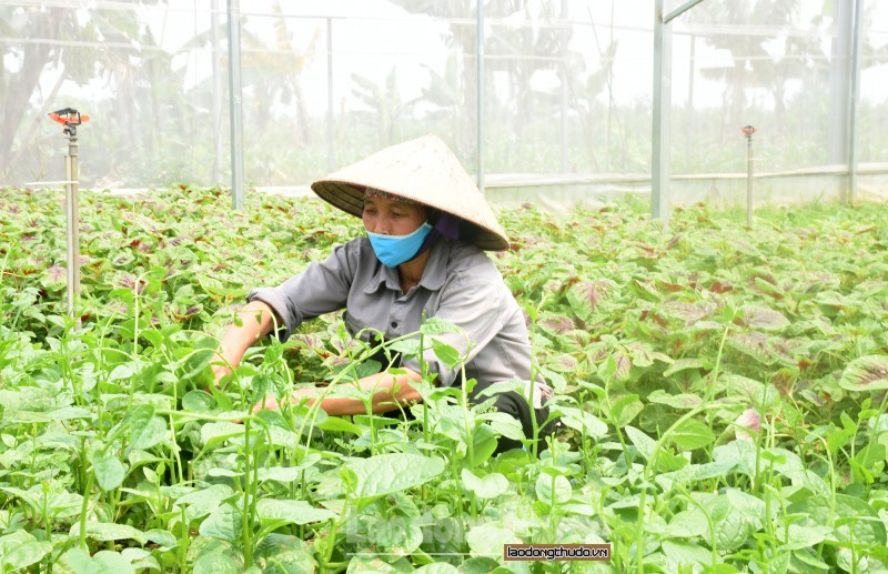 Hiệu quả từ phong trào nông dân thi đua sản xuất kinh doanh giỏi