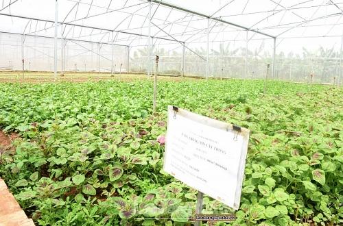 Tái cơ cấu để thúc đẩy tăng trưởng ngành Nông nghiệp