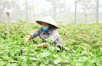 Chú trọng đào tạo nghề nông nghiệp cho lao động nông thôn