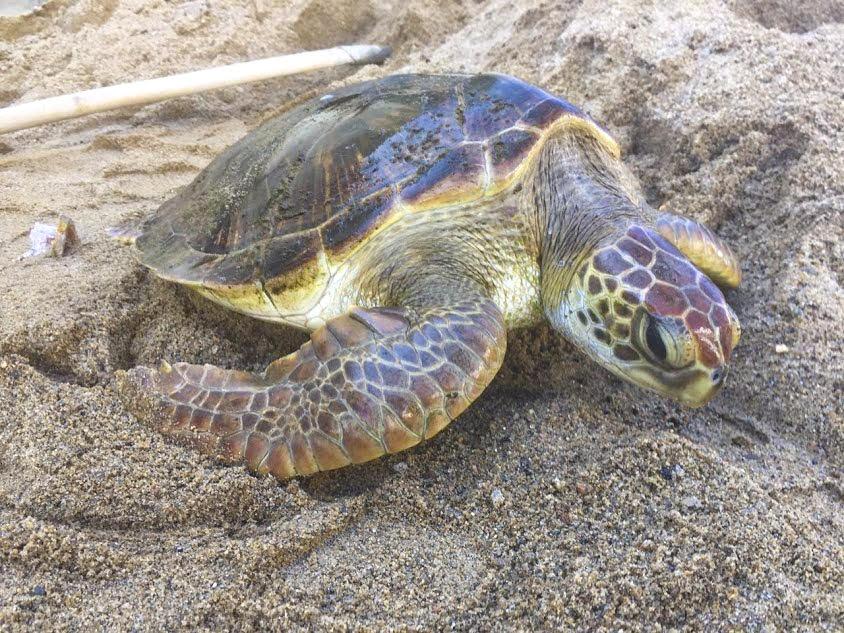 Hai đối tượng vận chuyển trái phép rùa biển lĩnh án 18 năm tù