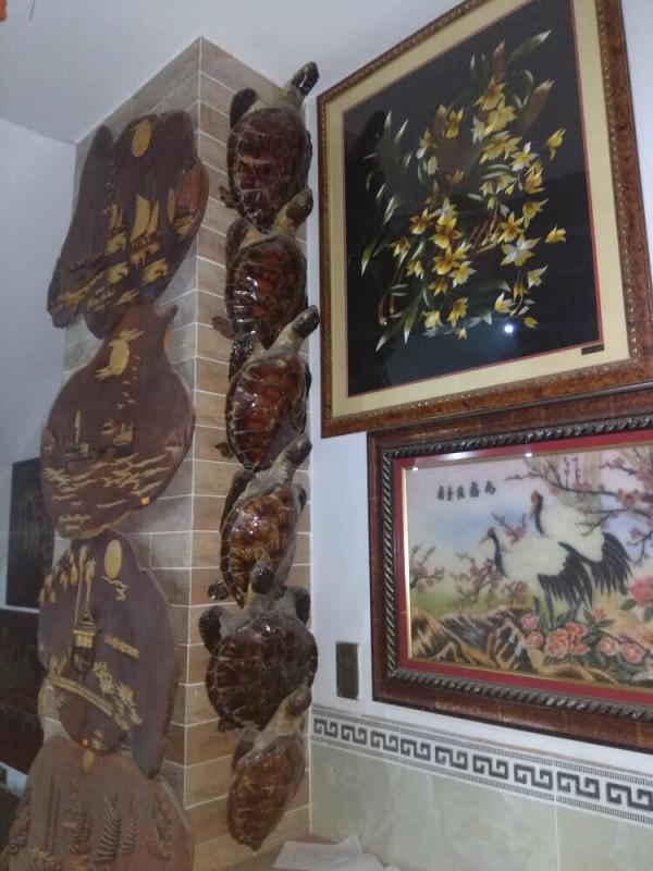 Tịch thu 72 tiêu bản rùa biển quý hiếm ở Vũng Tàu