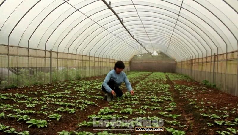 Hà Nội: Tiếp tục đẩy mạnh sản xuất nông nghiệp an toàn