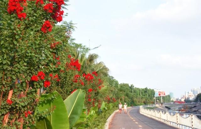 Muôn hoa khoe sắc bên tuyến đường đi bộ dài nhất Thủ đô